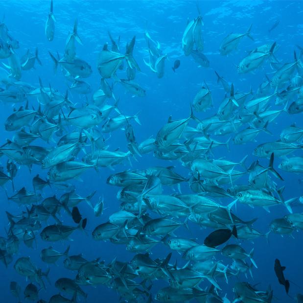 image our-ocean-2020 ocean palau fish